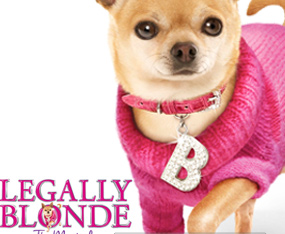 Designer Doggie Clothes | Designer Dog Clothes Demo Shop